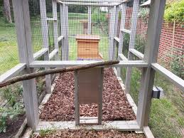 Raising Bees In Backyard by Keeping Bees With Chickens Coop Thoughts Blog