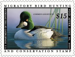 where can i buy duck how hunters and artists helped save america s waterfowl