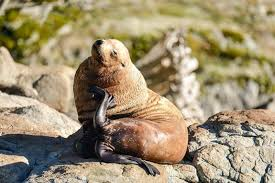 California wildlife tours images 4 hr wildlife campbell river whale watching adventure tours jpg
