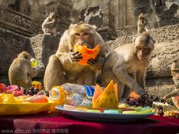 monkeys their thanksgiving in thailand 2 chinadaily cn