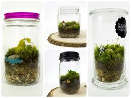 diy moss terrarium
