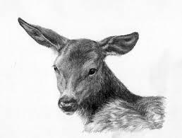 just a sketch young deer wetcanvas
