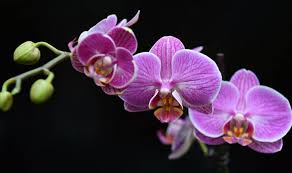 pictures of orchids how to look after your house orchids garden style