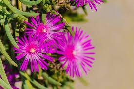 fiori viola ste artistiche quadri e poster con fiori petali pianta