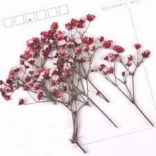 baby s breath wholesale 2017 baby s breath pressed flower arrangements for wall painting