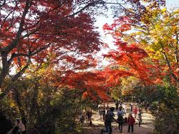 november tokyo why november is the best time to visit tokyo the petite wanderess