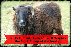 family outcast how to tell if you are the black sheep wehavekids