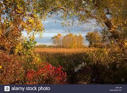 monroe michigan fall colors sterling park stock photo