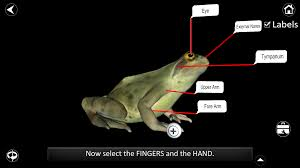 Virtual Frog Dissection Worksheet Dissection Lab Android Apps On Google Play