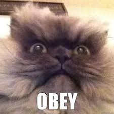 Colonel Meow Memes - an ode to colonel meow 44 photos evercats