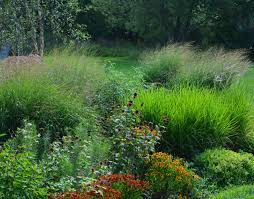 ornamental grass archives the obsessive neurotic gardener