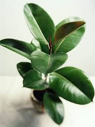 best houseplants to improve indoor air quality todays homeowner