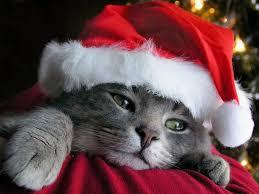 cat christmas free desktop wallpaper for cat free christmas wallpapaer