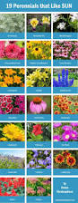 10 Perennials That Thrive In by Full Sun Perennials Low Maintenance Plants That Thrive In The Best