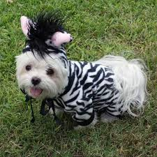 Cheap Dog Costumes Halloween Dog Costume Halloween Costume Small Dog Pet Costume