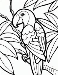 beautiful parrot coloring pages kids color coloring point