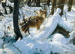 New Jersey wild animals images Coyotes in new jersey jpg