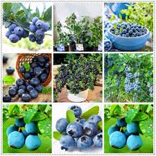 Online Fruit Trees For Sale - online get cheap fruit trees for small gardens aliexpress com
