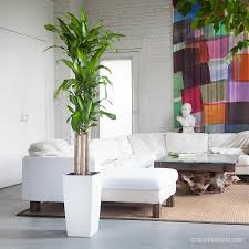plants for living room indoor plants nyc office and house plant delivery service in new