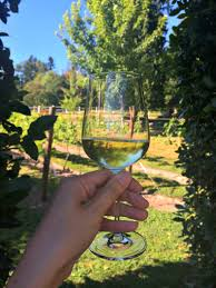 sur la table wine glasses vine to table with sur la table and fortessa life s ambrosia
