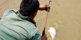 cara membuat umpan mancing ikan mas harian umpan air tawar umpan tahu harian kiloan kabar mancing