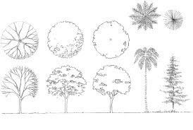 architecture drawing of trees interior design