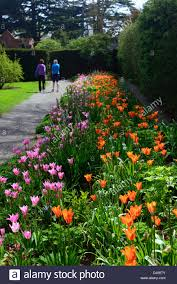 pink color combination tulip bed farmleigh estate phoenix park mixed mix colour color