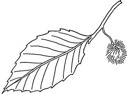tree leaf coloring pages for kids womanmate com