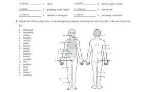 Answer Key For Anatomy And Physiology Lab Manual Human Anatomy 1