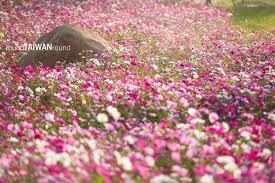 xinshe sea of flowers round taiwan round