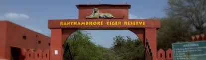 animals in ranthambore national park wild animals conservation