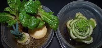 10 vegetables u0026 herbs you can eat once u0026 regrow forever food