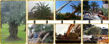 tree transplanting service tree relocation service ca northern