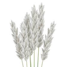 ornamental grass by cgaxis 3docean