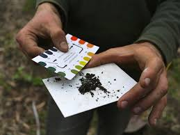 How To Plant A Vegetable Garden In Your Backyard by How To Test Your Garden Soil U0027s Ph And Fix It For Great Veggies