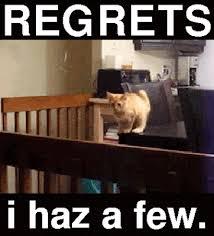 Funny Memes Gifs - jumping cat funny memes gifs