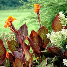 Tropical Plant Diseases - over wintering non hardy and tropical plants growing a greener