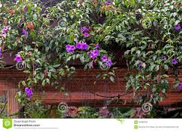 garden detail with climbing plants and flowers suspended stock