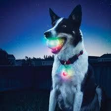 Light Up Dog Collar Glowstreak Led Ball