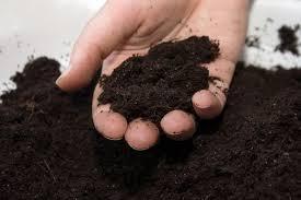 Plant Diseases Identification - soil testing u0026 insect u0026 plant disease identification cooperative