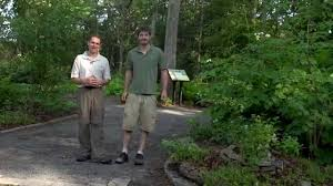 shade native plants edible native plants for the shade youtube