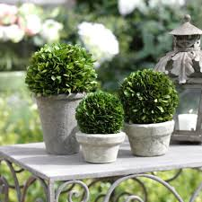 What Is A Topiary Boxwood Potted Ball Topiary Topiary Gardens And Garden Ideas