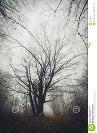 tree in mysterious halloween forest with fog stock photo image