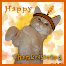 happy thanksgiving cat cat teamnetworks net