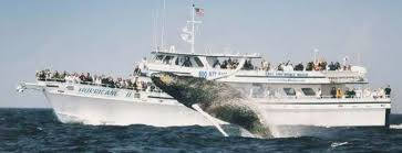 Whale Watches Cape Cod - gloucester whale watch in gloucester ma boston ma best whale watch