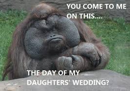 Best Animal Memes - funny animal memes are the best craveonline