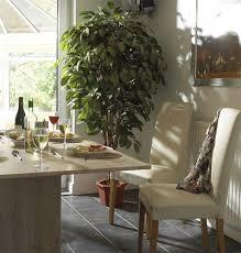 best low light indoor trees beautiful best indoor trees photos interior design ideas