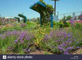 drought tolerant green roof garden the council district 9 stock