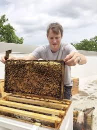 sweet as honey stephan jaklitsch designs apiary for follow the honey