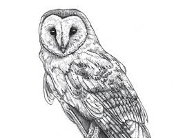 owl ink drawing etsy